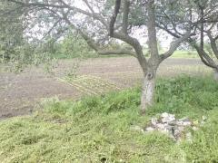Sell house plot in the village of Prudy, kaharlyts'kyi R-nu